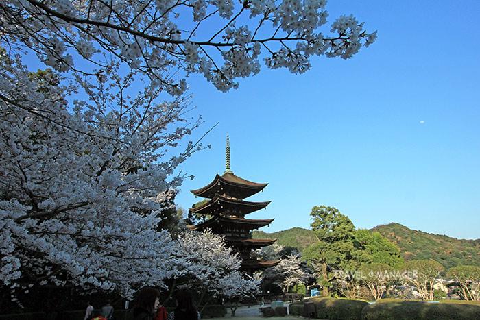 เจดีย์ 5 ชั้น วัดรุริโคจิ 1 ใน 3 เจดีย์ที่มีความสวยงามที่สุดของญี่ปุ่น