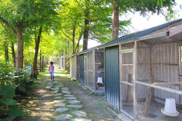 ทางเดินชมสัตว์ภายใน River Forest Leisure Farm