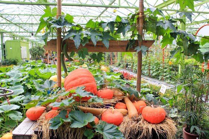 Wang Shan Leisure Farm มีมุมให้ถ่ายรูปหลายมุม