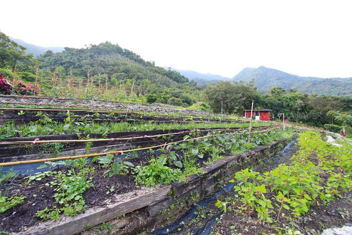 โซนปลูกผักใน Toucheng Leisure Farm