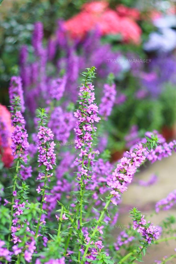 ดอกไม้สวยๆ ที่ Flower Home Leisure Farm