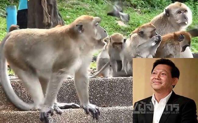 """ปิ๊งไอเดีย ตั้ง """"นิคมจ๋อ"""" แก้ปัญหาพิพาทคนกับลิง"""