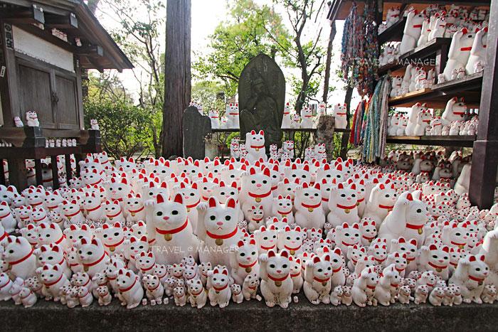 วัดโกโทคุจิ วัดนี้มีแมวเหมียวเต็มไปหมด