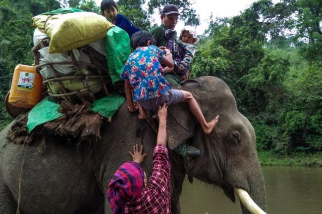 ชาวพม่าเร่งหลบหนีการสู้รบในรัฐกะฉิ่น เด็กเล็ก-คนชรานั่งช้างลัดเลาะป่าหาที่หลบภัย