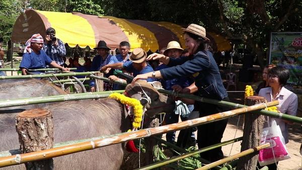 กลุ่มอนุรักษ์ควายไทย ไทเชียงคาน และเกษตรกรเครือข่าย ร่วมทำพิธีสู่ขวัญควาย