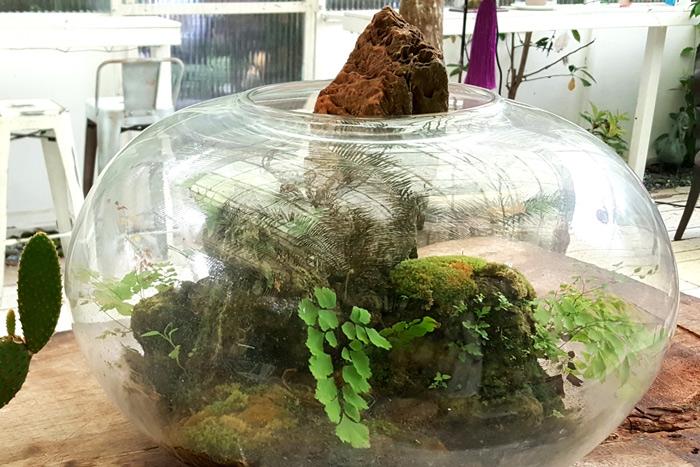 ผลงานการจัดสวนในโหลแก้วจากผู้เข้าร่วมเวิร์คชอป