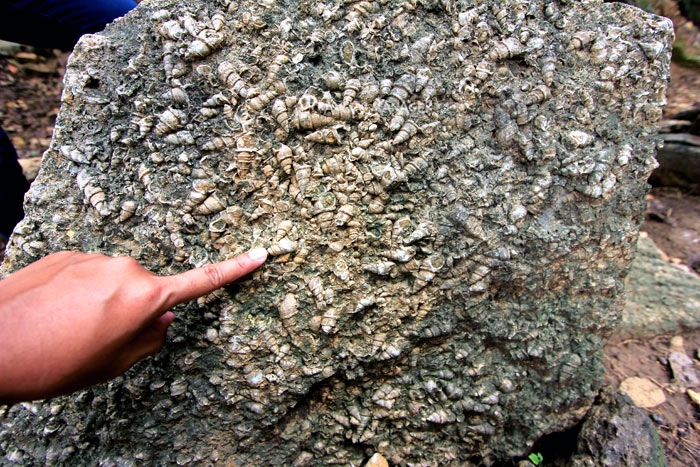 ชั้นหอยน้ำจืดที่ทับถมฝังแน่นในชั้นหินที่ สุสานหอยล้านปี
