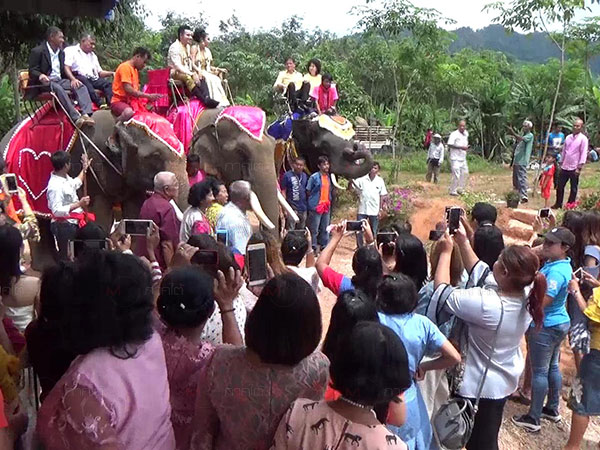 ฮือฮา! หนุ่มห้วยยอดขึ้นขี่ช้าง ยกขบวนขันหมากสู่ขอเจ้าสาว บรรยากาศสุดคึกคัก