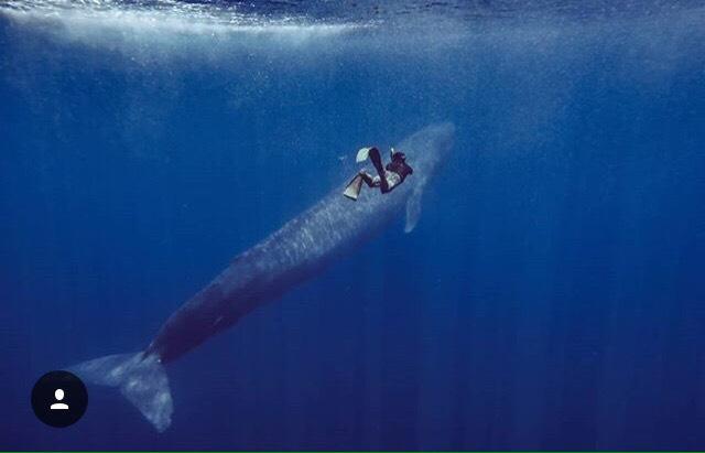 ฟินกว่านางเงือก!พิม-พิมพ์พยัพ กับครั้งแรกในชีวิตที่ว่ายน้ำกับวาฬสีน้ำเงิน
