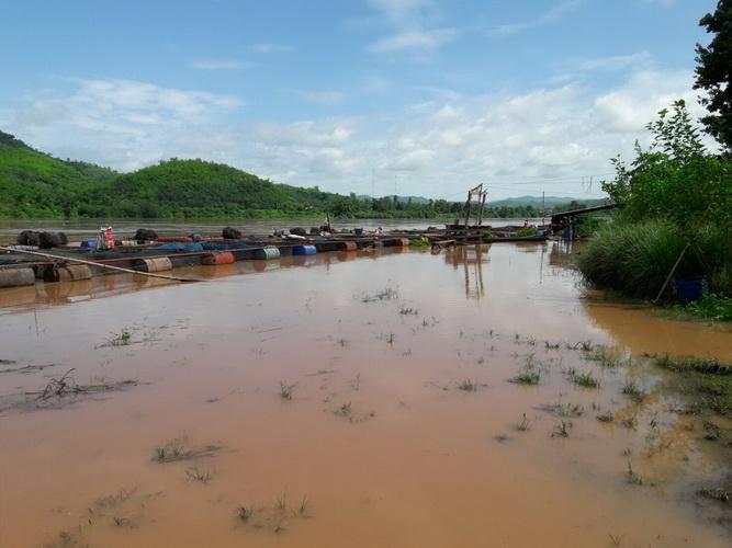 น้ำโขงหนุนทำปลากระชังที่เลยน็อคตายเกลื่อน ด้านหนองคายเร่งสูบน้ำลงโขงหวั่นท่วมเมือง