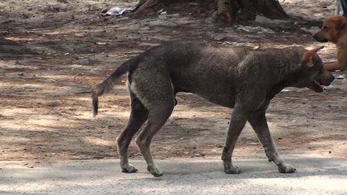 """พ่อให้ลูกกิน """"หมา"""" ที่มากัด เชื่อไม่เกิดโรค สุดท้าย ด.ช.พม่าวัย 2 ขวบ ดับจาก """"พิษสุนัขบ้า"""" เป็นรายที่ 15"""