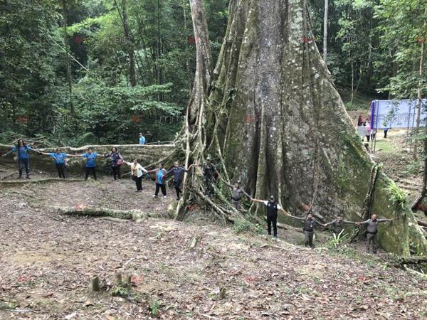 """ยะลาจัดงานวัฒนธรรมสู่การท่องเที่ยวต้นไม้ใหญ่ """"รุกข มรดกของแผ่นดิน ใต้ร่มพระบารมี"""""""