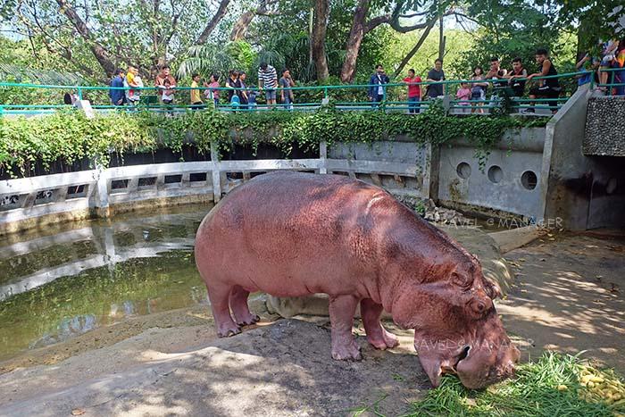 """คึกคักย้อนวันวานที่ """"เขาดิน"""" ก่อนปิดตำนานสวนสัตว์แห่งแรกของไทย"""