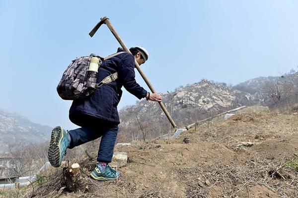 นางซูผิง ลุยปลูกป่าเพื่อสร้างฝันของลูกสาวให้เป็นจริง(แฟ้มภาพ ปี2017--ซินหวา)