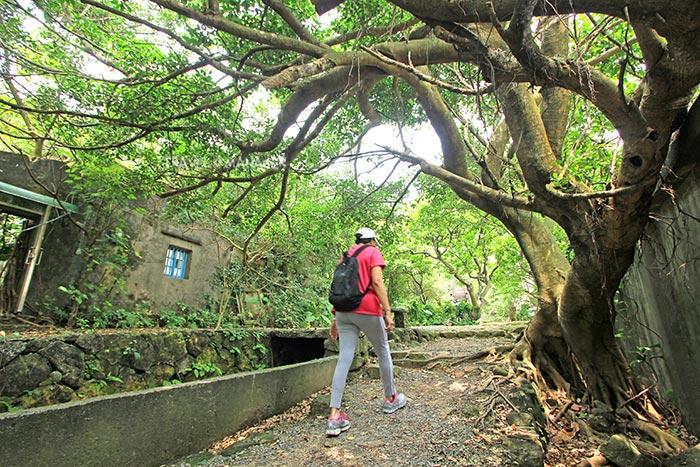 เส้นทาง(ช่วงแรก)ผ่านแมกไม้อันร่มรื่นสู่ยอดเขาหนานจือหลิน