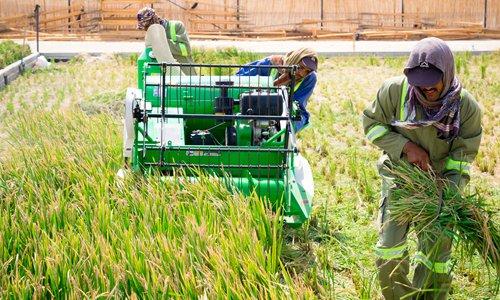 40 ปี ปฏิรูปและเปิดประเทศ : จากยุคแกะเปลือกไม้กิน จีนไฮบริดปลูกข้าวในทะเลทรายดูไบ