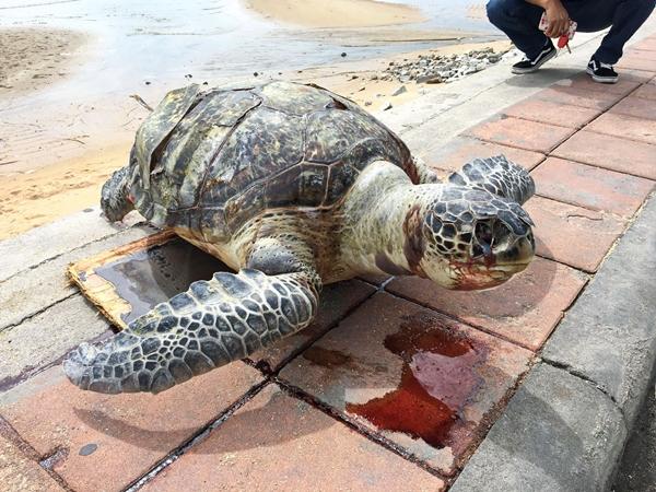 ทะเลอ่าวไทยวิกฤต เต่าทะเล-โลมา ตายเกลื่อนนับแต่ช่วงต้นปีที่ผ่านมา
