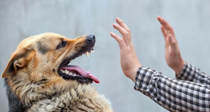"""ตายจาก """"พิษสุนัขบ้า"""" รายที่ 16 ถูกกัดที่สุราษฎร์ธานีนานกว่า 1 ปี มาตายที่ตาก"""