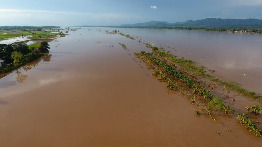 น้ำโขงเริ่มลดแต่ยังลุ้นฝนตกซ้ำรอบใหม่ นาข้าว อ.บ้านแพงเน่ารายแล้วกว่า 8 หมื่นไร่