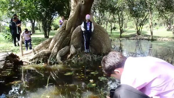ตะลึง! นักเที่ยวแห่ชม พูพอนต้นทองหลางน้ำ ในสวนป่าเมืองอุบลฯ