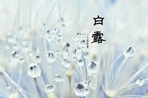 """จีนรับ """"สารทน้ำค้างขาว"""" กินมันเทศยอดอาหารแห่งฤดูกาล"""
