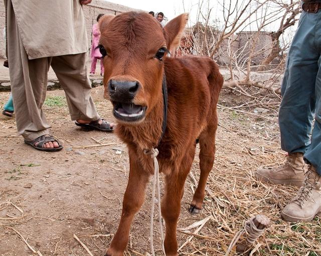 ตำนานวัวแดง...กับวันสิ้นยุค!!!