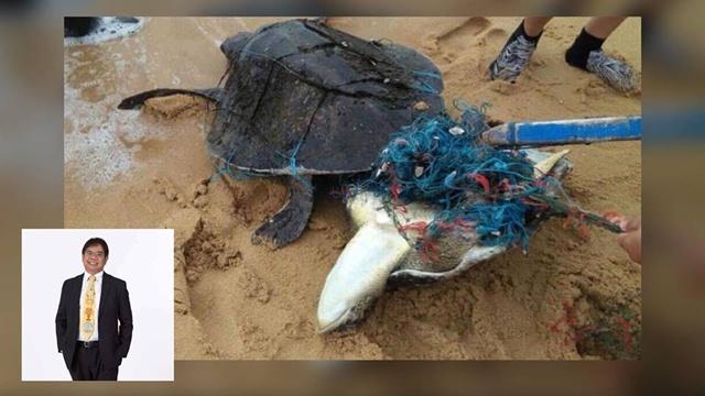 ดร.ธรณ์ เศร้า ชี้ทะเลร้องไห้ให้กับแม่เต่า 2 ตัว ติดขยะกอดกันตาย จากน้ำมือมนุษย์