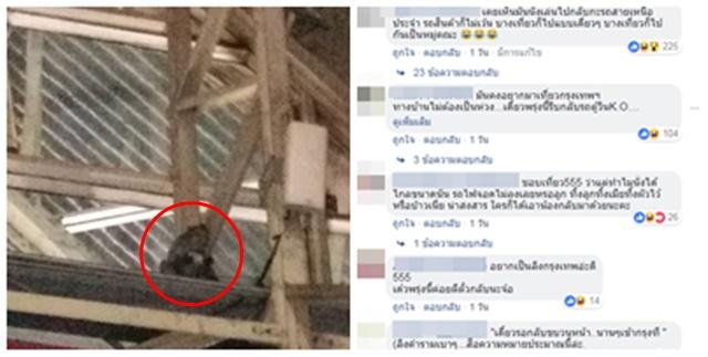 เอ็นดู! จ๋อลพบุรี ติดขบวนรถไฟเข้าเมืองกรุง อาศัยอยู่ใต้หลังคาหัวลำโพง