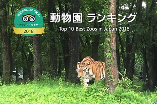10 อันดับสวนสัตว์ยอดนิยมประจำปี 2018 โหวตโดยคนญี่ปุ่น!!