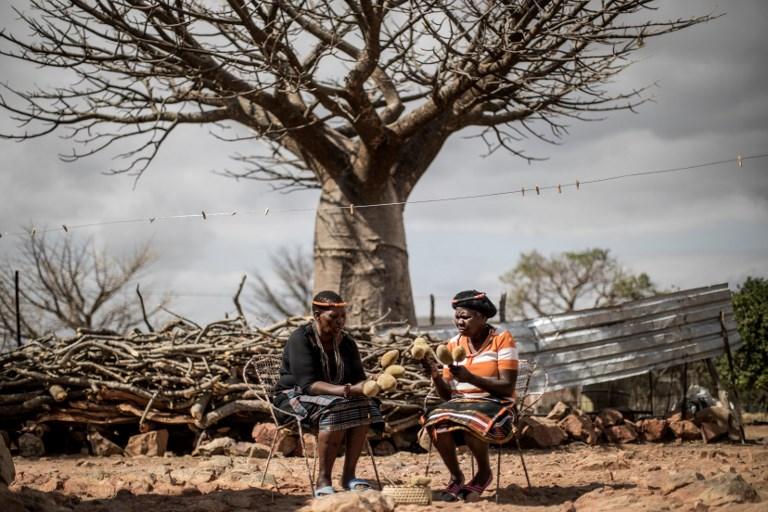 อันนาห์ มูว์ฮะวี (ซ้าย) และเพื่อน เป็นหนึ่งในผู้หญิงราวพันคนของหมู่บ้านที่มีอาศัยดูแลและเก็บเกี่ยวผลเบาบับ ดังที่เห็นในมือของเธอทั้งสอง (MARCO LONGARI / AFP )