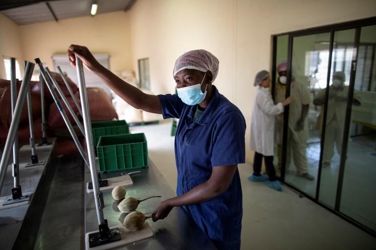 หญิงคนงานใช้เครื่องบีบอัดเพื่อกระเทาะเม็ดภายในผลเบาบับ (MARCO LONGARI / AFP)
