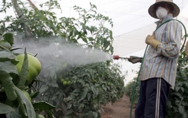 """ก.เกษตรฯ แจง 7 ผักผลไม้พบยาฆ่าแมลงสูง มีแค่ """"ส้ม"""" ที่ไม่ปลอดภัย ยัน """"สารเคมี"""" ยังจำเป็นต้องใช้"""