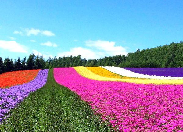 """ญี่ปุ่นจัดโปรโมชั่น """"ท่องเที่ยวช่วยเหลือฮอกไกโด"""" ให้ส่วนลดที่พักมากถึง 70%"""