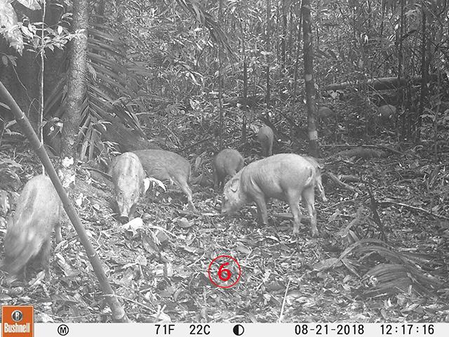 กระทรวงสิ่งแวดล้อมกล่าวว่า เจ้าหน้าที่กว่า 1,200 คนออกลาดตระเวณดูแลป่าและสัตว์ในความรับผิดชอบกว่า 46 ล้านไร่ แล้วจะปกป้องคุ้มครองหมูป่าพวกนี้ได้อย่างไร.