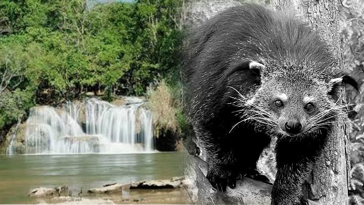 """ซ้ำรอยเสือดำ! ปลัดอำเภอฉาวขนออฟโรดล่า """"หมีขอ"""" อุทยานแห่งชาติไทรโยค กาญจนบุรี"""