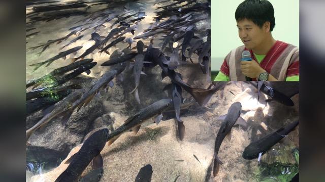 """นักวิชาการ ให้ข้อมูลอีกด้าน """"ดรามาปลาพลวง"""" ชี้ฝาย-เขื่อน ปิดกั้นการอพยพของปลา"""