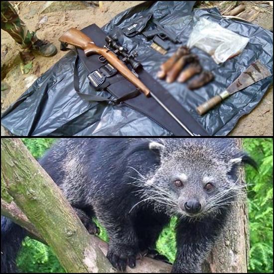 (บน) ของกลางบางส่วนทั้งอาวุธปืนและซากส่วนขาอุ้งเท้าหมีขอ หลังจับกุมนายวัชรชัย สมีรักษ์ ปลัดฝ่ายป้องกันอำเภอด่านมะขามเตี้ย จ.กาญจนบุรี กับพวก (ล่าง) ลักษณะหน้าตาของหมีขอ (แฟ้มภาพ)