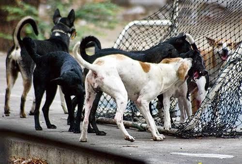 ลุงชาวสงขลาเลี้ยงหมากว่า 80 ตัว สุดท้ายถูกหมาจรกัด ติดเชื้อพิษสุนัขบ้าดับ ยอดตายเพิ่มเป็น 17 ราย