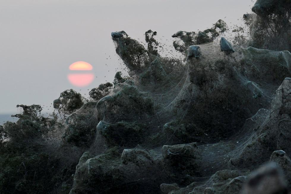 ภาพพระอาทิตย์ขึ้นโผล่พ้นชายป่าที่ปกคลุมไปด้วยใยแมงมุมความยาวร่วม 1 กิโลเมตรตามแนวชายฝั่งทะเลสาบวิสโตนิดา (Lake Vistonida) กรีซ ใยแมงมุมจำนวนมหาศาลที่เกิดขึ้นครั้งนี้ถือเป็นปรากฎการณ์หายาก นักชีววิทยาชี้ว่า เกิดมาจากสภาพอากาศที่อบอุ่นผิดฤดูกาล ส่งผลทำให้ประชากรยุงและริ้นซึ่งอาหารหลักของแมงมุมเพิ่มจำนวนส่งผลทำให้มีแมงมุมจำนวนมาก ภาพประจำวันศุกร์(19) รอยเตอร์