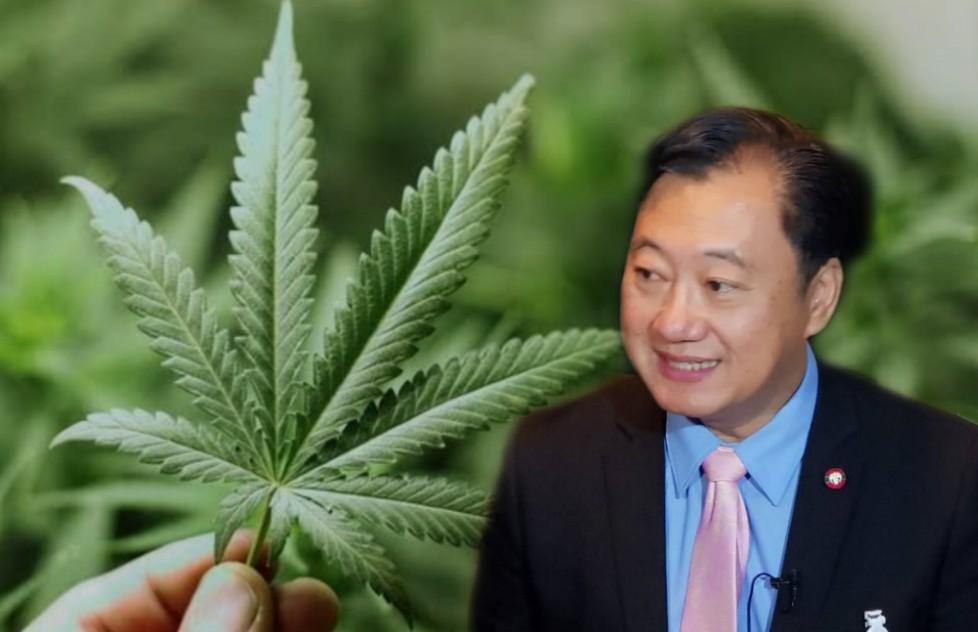 """สนช.เชื่อออก กม.ยาเสพติดปลดล็อก """"กัญชา"""" ทันก่อนเลือกตั้ง เป็นของขวัญปีใหม่คนไทย สร้างรายได้เข้าประเทศ"""