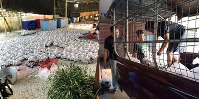 ชาวบ้านน้ำตาตกใน โดนเบี้ยวไม่มาเอาข้าว หมื่นกล่องกองทิ้ง เสียหายเกือบล้าน