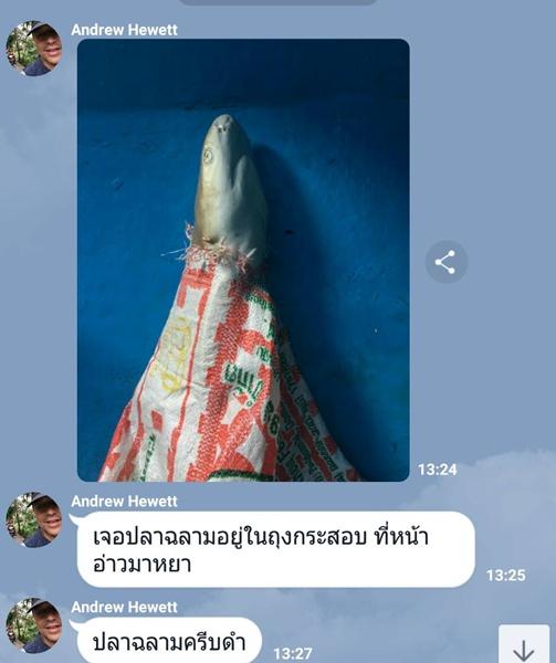 ไม่ยืนยัน! ภาพซากฉลามหูดำติดกระสอบปุ๋ยเกิดขึ้นที่อ่าวมาหยา จ.กระบี่