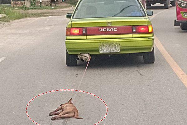 สาวขับรถเก๋งลากสุนัขไปบนถนนกลับคำให้การอ้างไม่รู้ว่าถูกผูกไว้