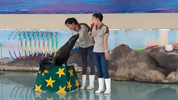 ปลุกสำนึกเยาวชนรักษ์สัตว์ป่าและธรรมชาติ  ออมสินมอบทุนให้แมวน้ำสวนสัตว์ขอนแก่น