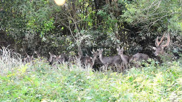 กวางศูนย์เรียนรู้ตามศาสตร์พระราชาในหลวง ร.9 ชุมพรถูกน้ำป่าซัดหาย 20 ตัว