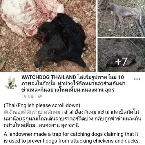 ภาพจากเพจ WATCHDOG THAILAND