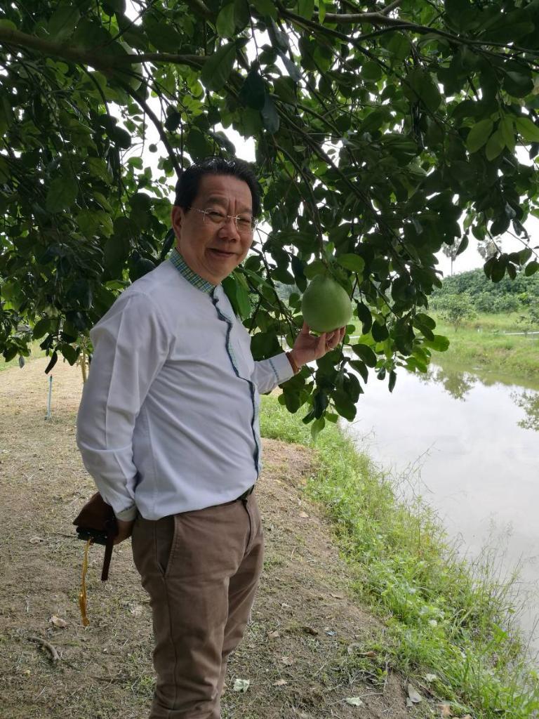นายมงคล ลีลาธรรม กรรมการผู้จัดการธนาคารพัฒนาวิสาหกิจขนาดกลางและขนาดย่อมแห่งประเทศไทย ชมสวนส้มโอทับทิมสยาม อ.ปากพนัง จ.นครศรีธรรมราช
