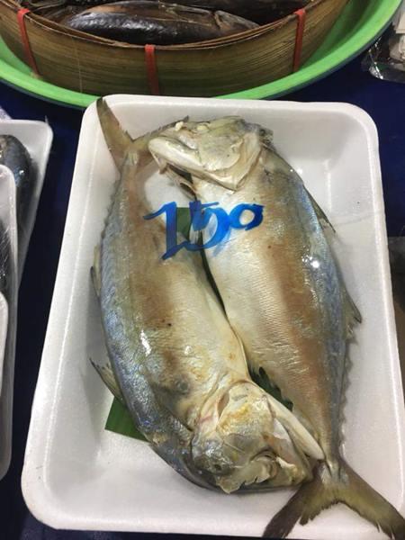 ราคาปลาทูวันนี้
