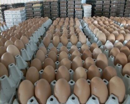 """""""พาณิชย์""""จัดแคมเปญ""""รักใครให้กินไข่"""" ซื้อเป็นของฝากของขวัญเพื่อเพิ่มการบริโภค"""