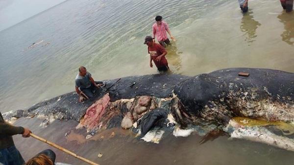 วาฬตัวที่ 3 ตาย! เพราะขยะพลาสติก แล้วฝีมือใคร?